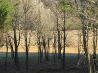 Lot 38 on Dudi Trail in Kahite golf & Lake Community. Beautiful building lot in area of very nice homes. Mountain views, and overlooking the 13th Fairway on Kahite golf course. This is your chance to purchase land in beautiful East Tennessee and build the