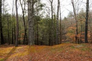 Lot 19 Rainbow Circle Townsend, TN 37882 Lovely lot in Laurel Valley Cold Springs! Laurel Valley is located on the peaceful side of the Great Smoky Mountains, and is an exclusive gated neighborhood. Build your dream home in this desirable community! Small